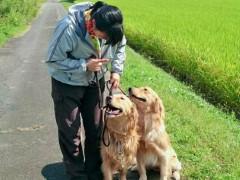 日本人のドッグトレーナー/パピーから成犬まで対応します。