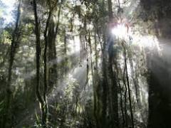 ウェイターetc募集、森の中リゾート
