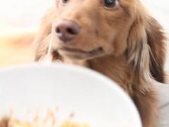 Dog レストランでキッチンスタッフ募集