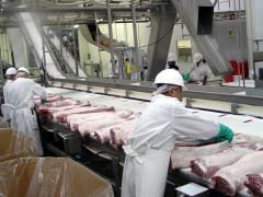 時給$24〜!食肉工場☆ビザ取得も可能
