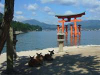 世界遺産・日本三景で有名な観光地「宮島」でリゾートバイト★