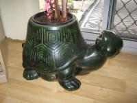 タートル(亀)の観葉植物鉢売ります。お部屋のインテリアにどうぞ。