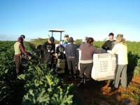 A Fun Variety of Farm Jobs!!