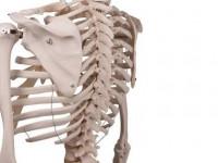 $25‼️腰痛⭐️肩こり⭐️神経痛⭐️姿勢改善⭐️骨盤⭐️レントゲン、他