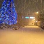 """クリスマスは """"クルシミマス""""???"""