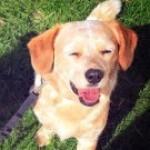 祝 トリマー就職内定情報Dainty Dog grooming college