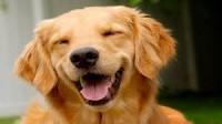 トリマーはどんなお仕事か?Dainty Dog grooming college