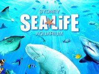 水族館から環境問題を考える in SEA LIFE Sydney Aquarium