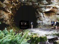シドニーで土ボタルが見れる廃トンネル