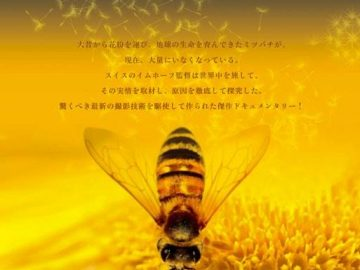 10月のシドニーイベント/こけびー1周年チャリティーイベント「みつばちの大地」上映会