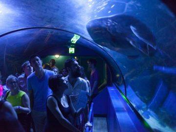 12月のシドニーイベント/水族館でクリスマス・ナイト・パーティー!
