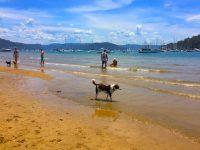 ドッグビーチでワンコと泳ごう!