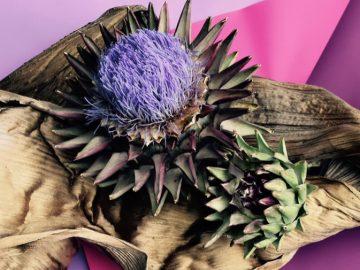 4月のシドニーイベント/シドニーで体感「生け花の世界」