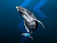 10月のシドニーイベント/世界最大の動物クジラに会いに行こう