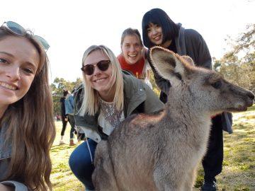 モリセットパーク(シドニー近郊)で野生のカンガルーに無料で会いに行こう