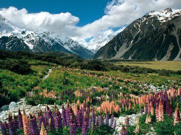 年末年始のニュージーランド まだ間に合います!