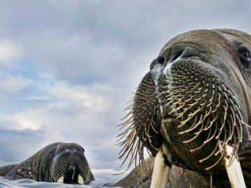 3月のシドニーイベント/野生動物を映す最高峰の写真展