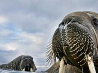 3のシドニーイベント/野生動物を映す最高峰の写真展