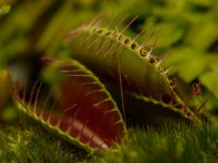Carnivorous plantsってなんだ?