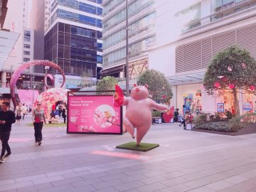 シドニー中心部で桜フェスティバル★