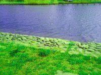 😇7/24デスカフェ、緑の草原の暖かなイメージ。次回8/28
