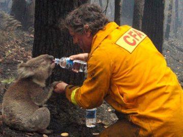【寄付して節税】史上最悪の山火事に私たちにできることは何か