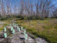 オーストラリア山火事復興支援でセカンドビザ申請が可能に【被災地での建設工事】