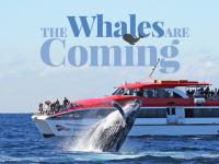 クジラに会える確率100%?シドニー発着ホエールウォッチング