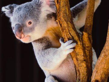 オーストラリア政府が留学生に資金サポート開始!