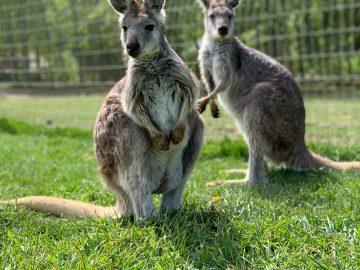 南オーストラリア州 海外からの移住リスト発表