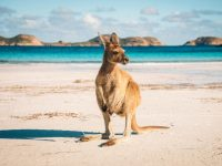 本気で考える! オーストラリア永住への道程とビザの種類