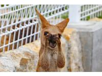 オーストラリアへ留学準備、滞在継続、帰国決断と3つのフェイズ2