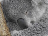 オーストラリアへ留学準備、滞在継続、帰国決断と3つのフェイズ!